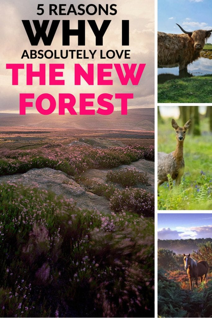 5 reasons why i absolutely love the new forest