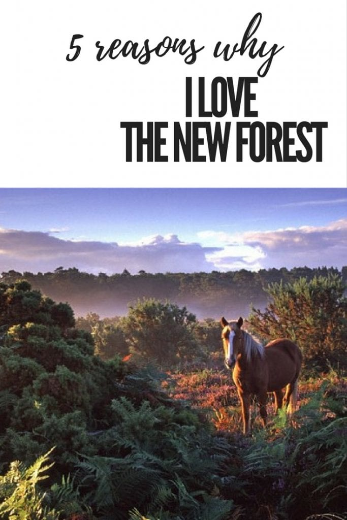 5 reasons why i love the new forest