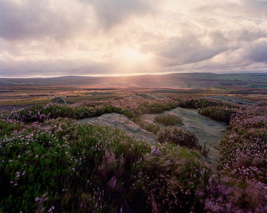 colourful-moorland-heather