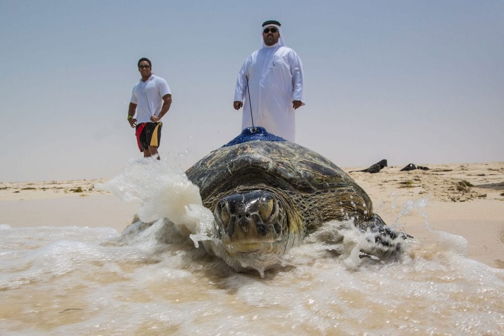 dubai turtle project rehab dubai bucket list