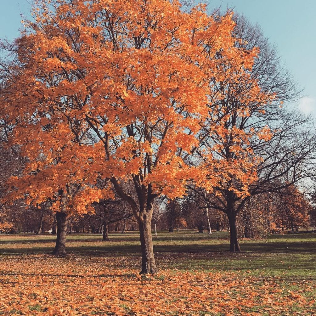 hyde park instagram london top places