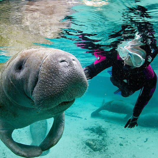 swim with manatees orlando what to do