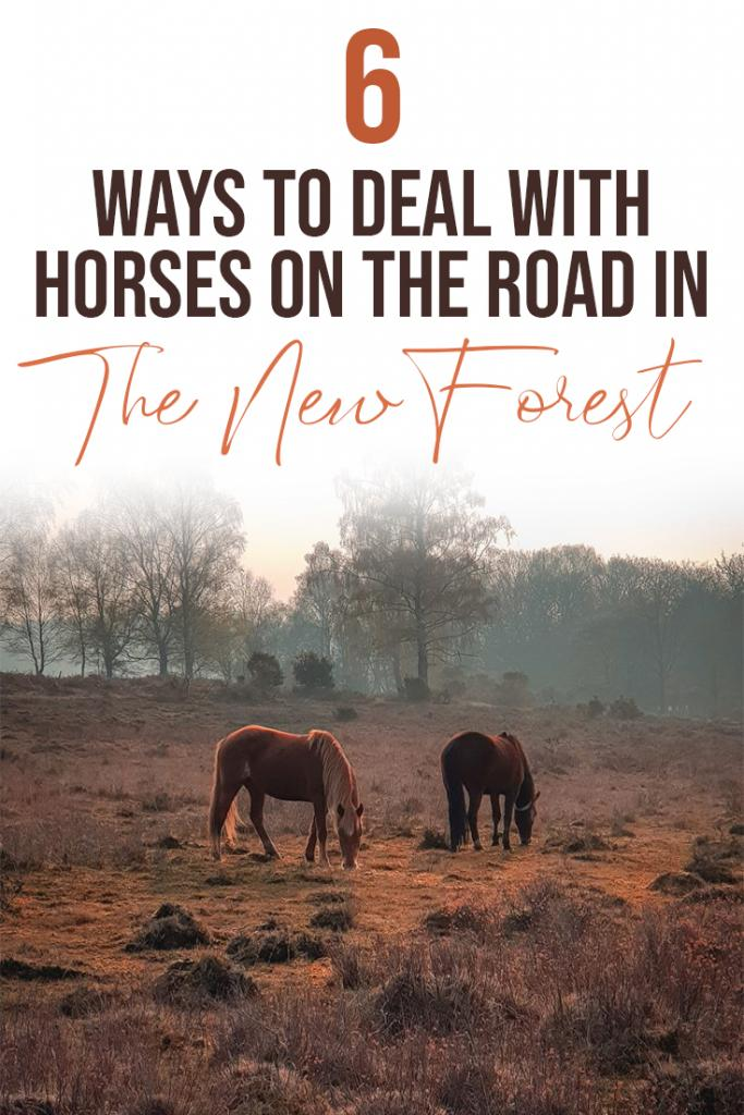 6 ways to deal with horses on the road in the new forest
