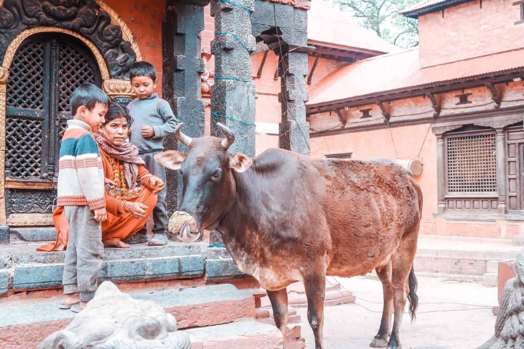 what not to do in nepal eat beef