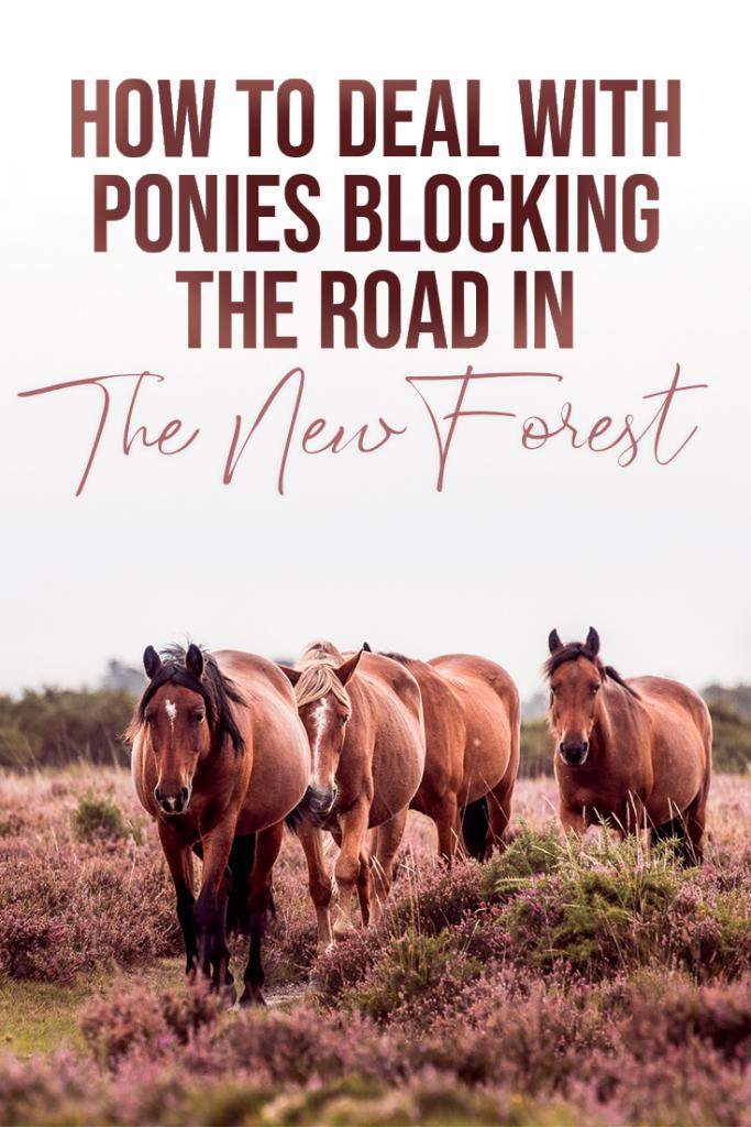 how to deal with ponies blocking the road in the new forest