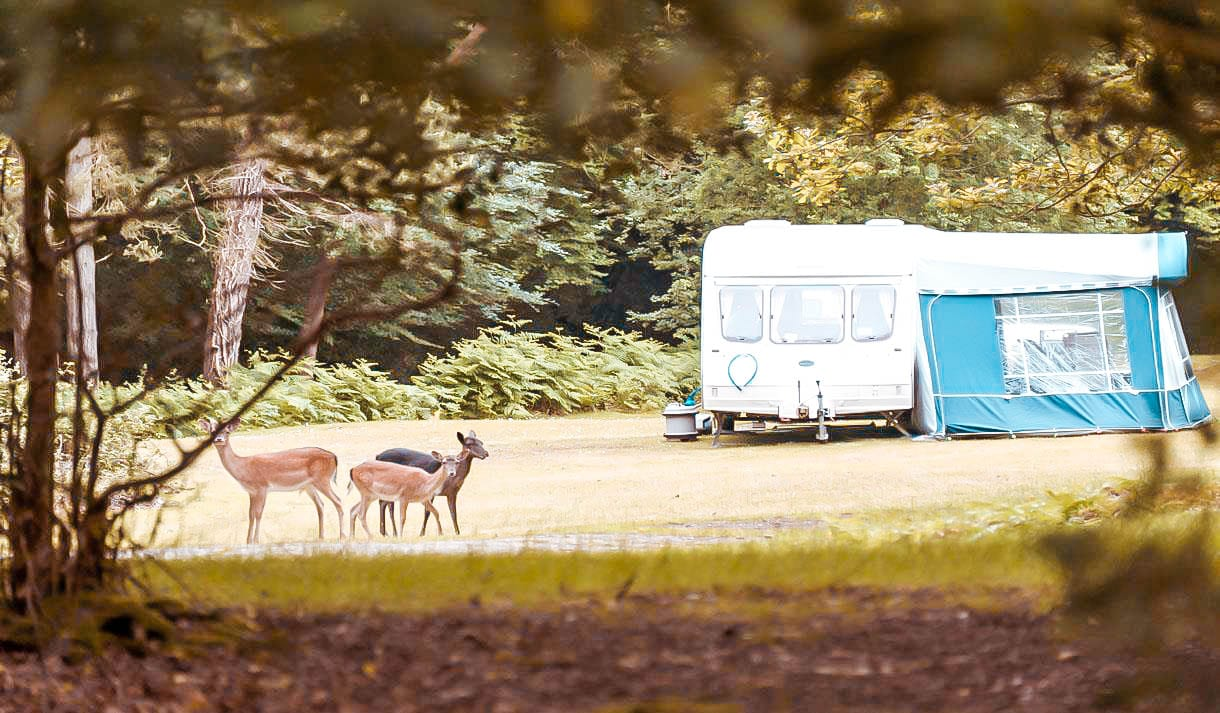 Aldridge HillCampsite New Forest Best Camping Grounds top 10
