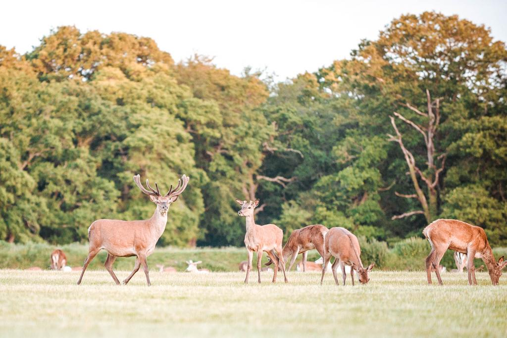 Roundhill campsite brockenhurst new forest best campsites top 10