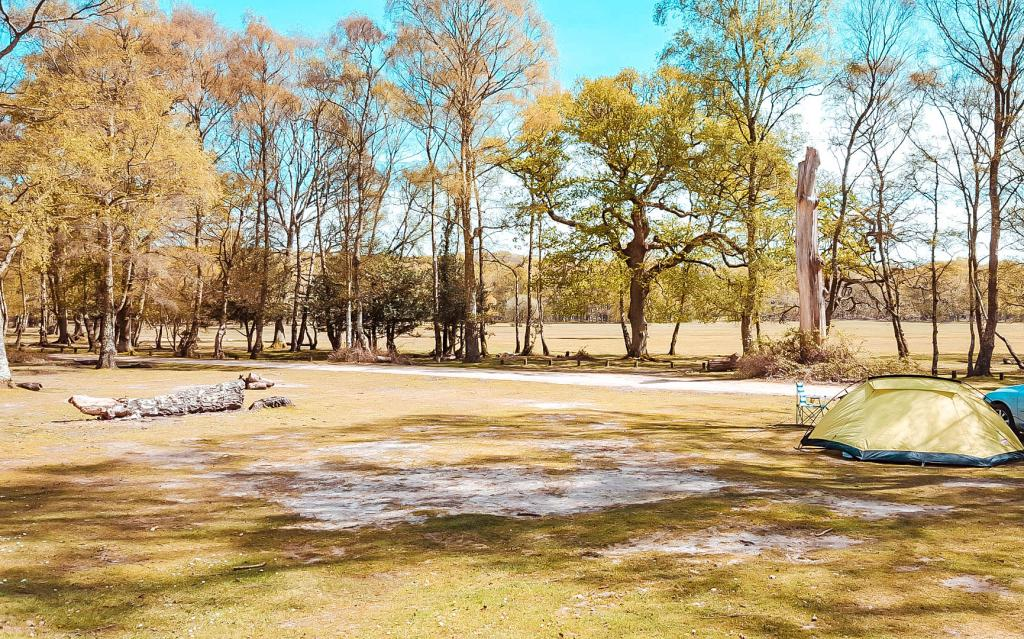 Holland woods campsite in Brockenhurst is one of the top 10 campsites in The New Forest
