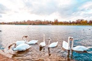 best picnic spots London hyde park london