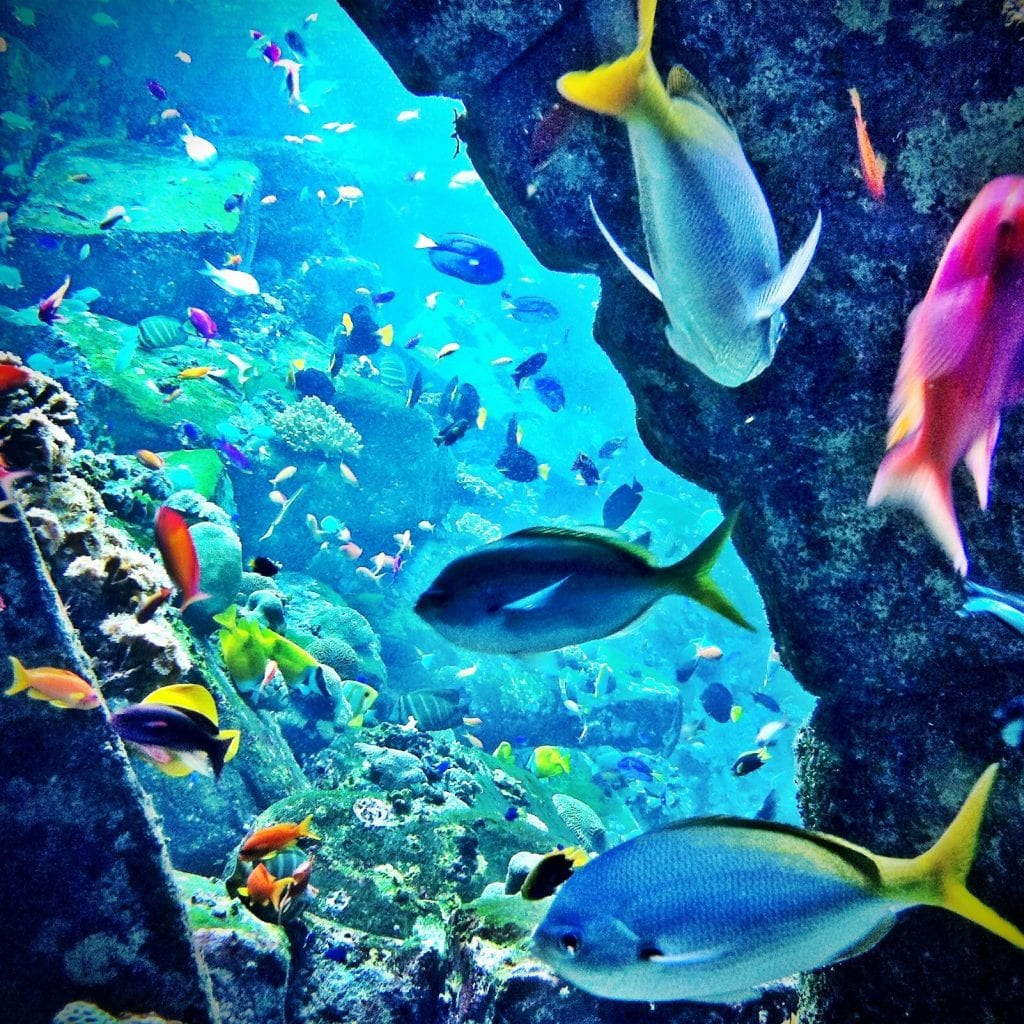 aquarium what to do dubai mall bucket list