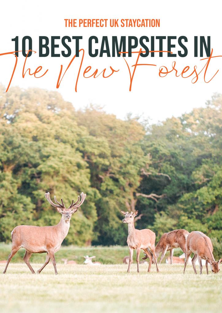 10 best campsites in The new Forest