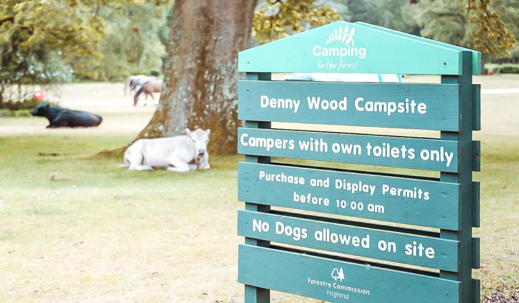 Denny Wood is one of the best campsites in The New Forest and lies between Lyndhurst and Beulieu