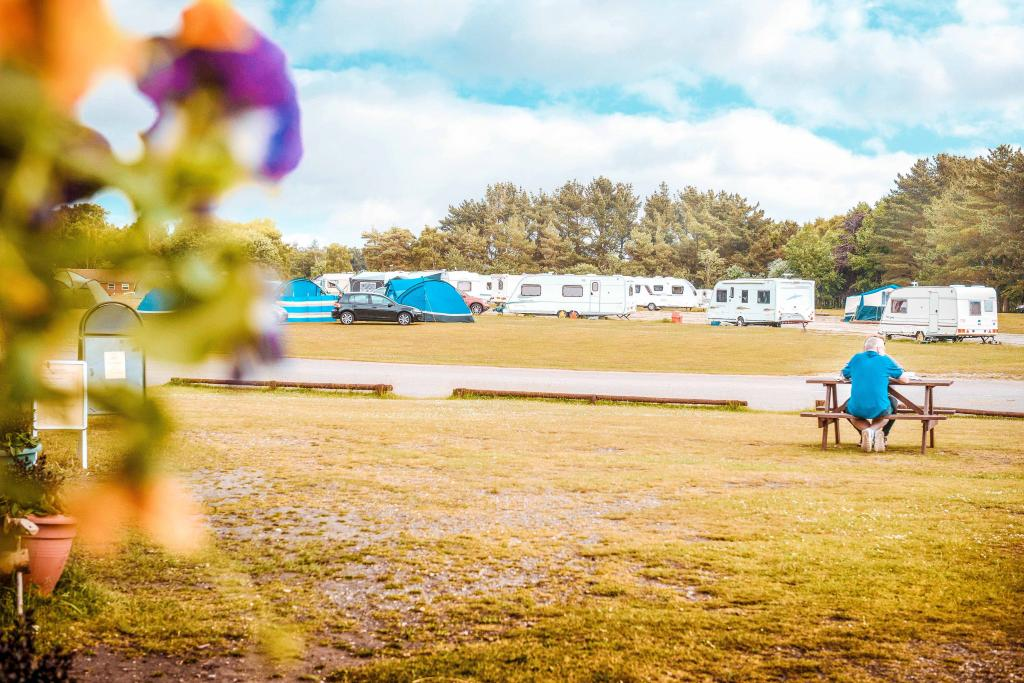 The Holmsley campsite is one of the best campsites in the New Forest