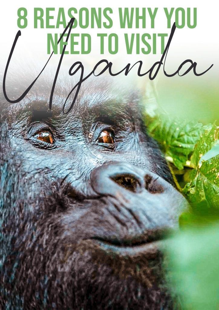8 reasons to visit Uganda8 reasons to visit Uganda