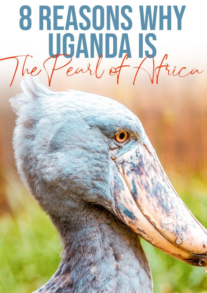 8 reasons why uganda is the pearl of africa