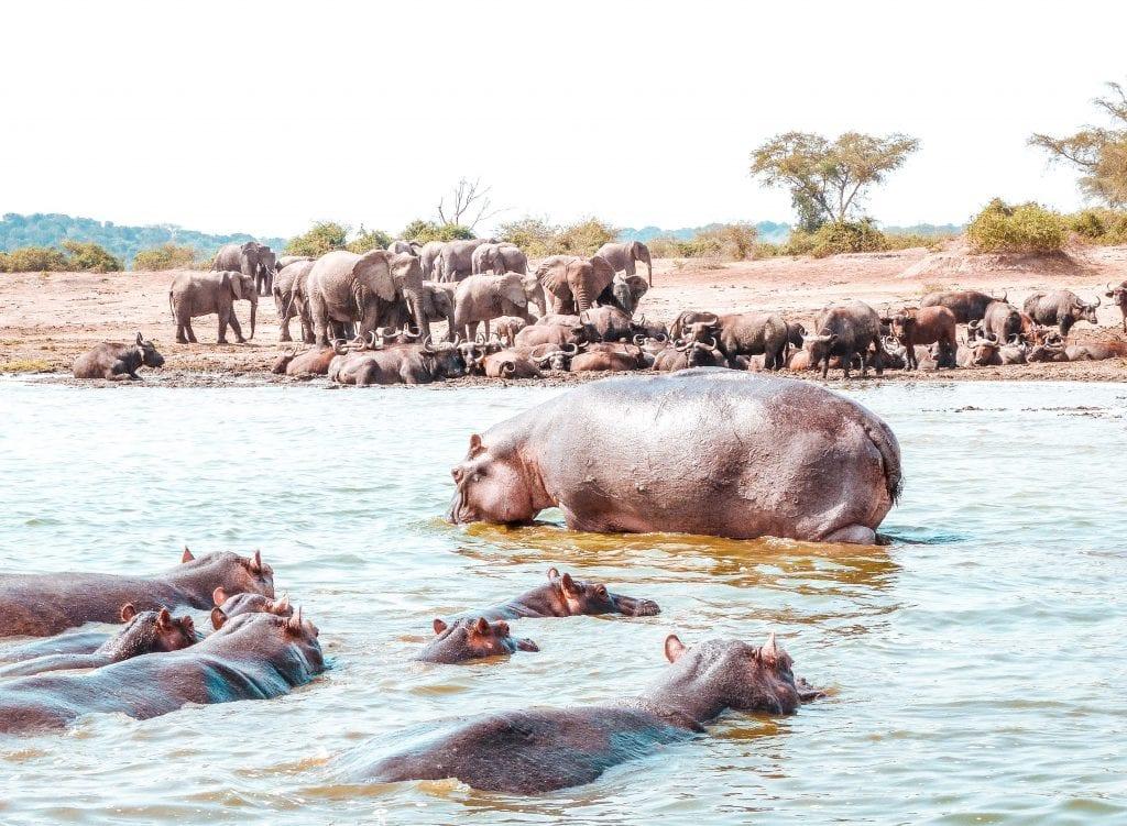 8 reasons why visit uganda Kazinga channel
