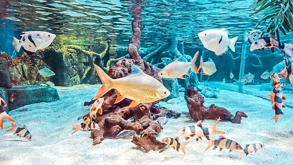 10 things attractions bournemouth oceanarium