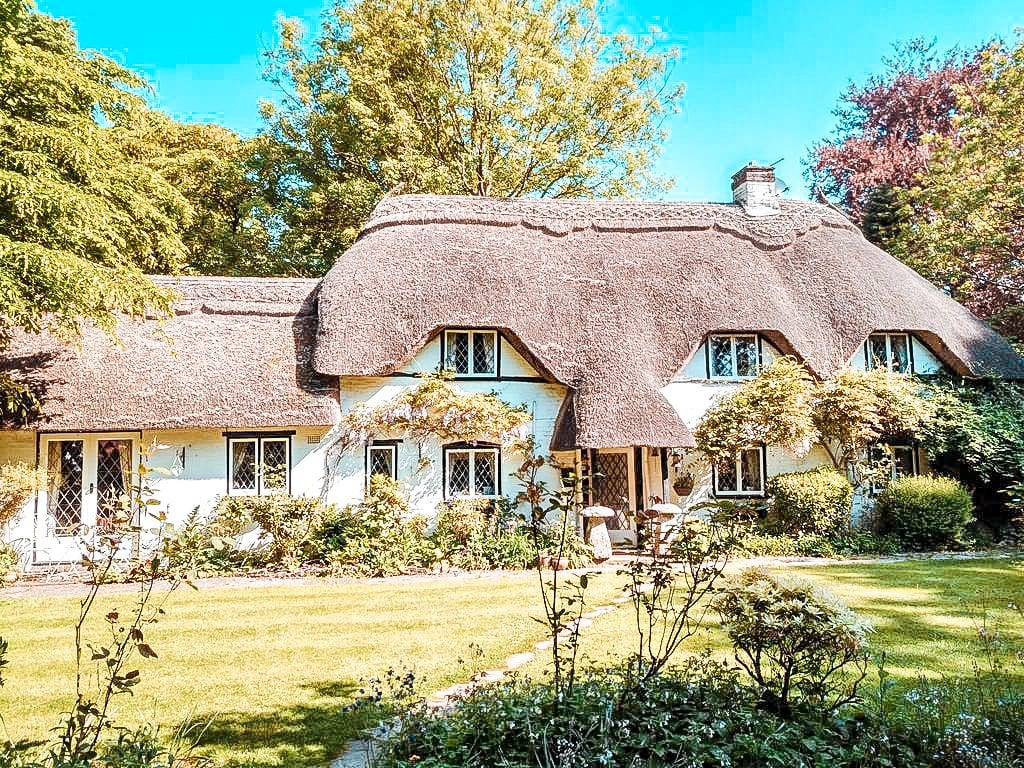 best dog friendly hotels new forest thatched eaves ibsley
