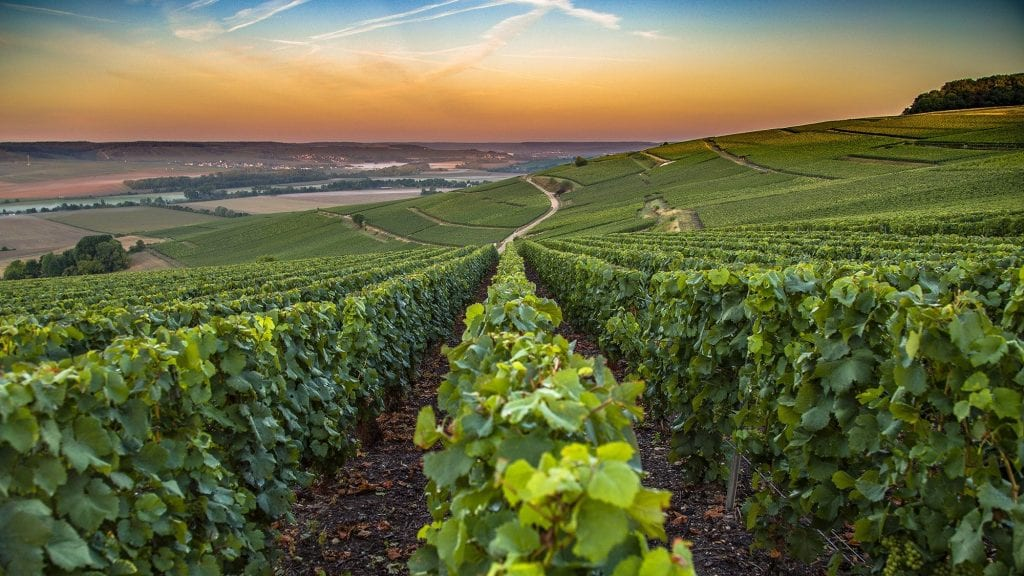 best daytrips from Paris champagne