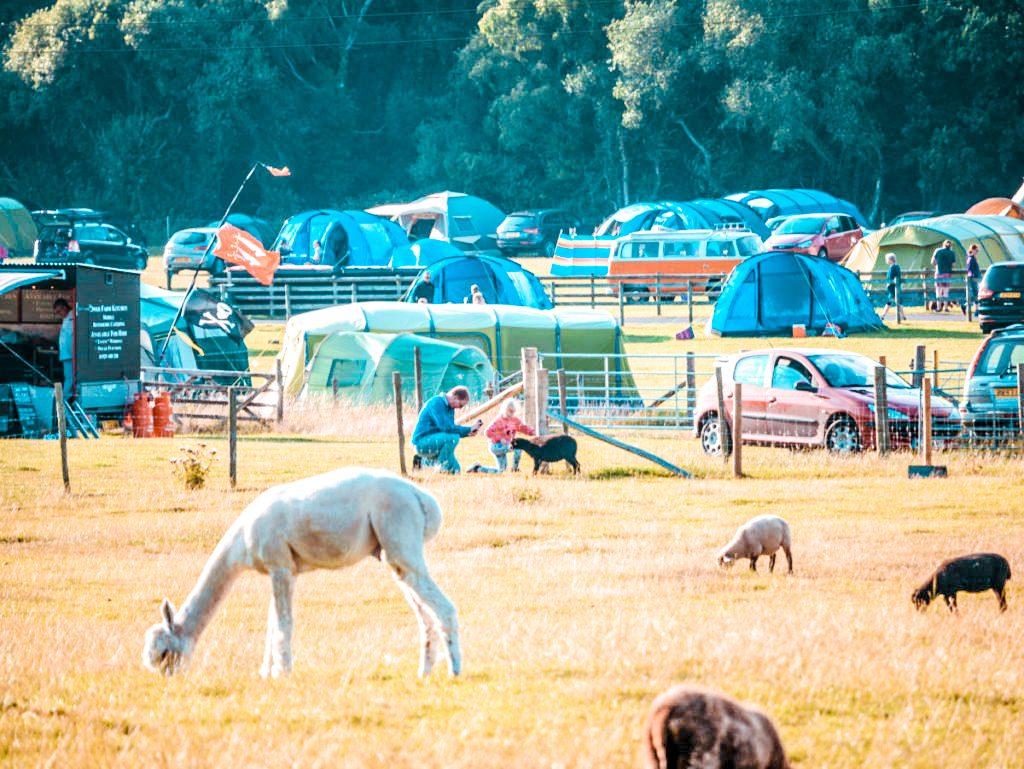 dorset campsite Norden Farm Campsite