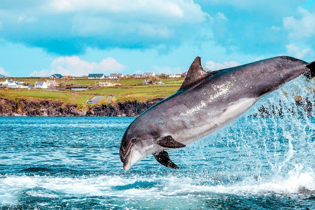 11 best things to do in dingle hero