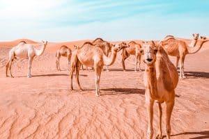 15 best desert safaris in dubai hero