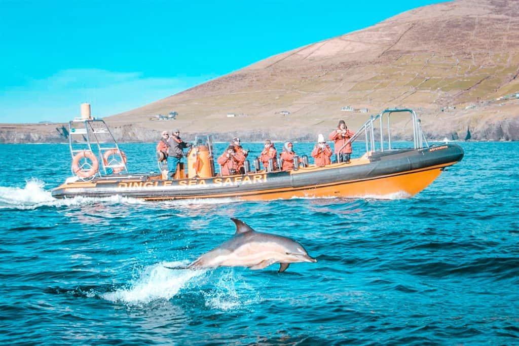 Fungie dingle dolphin hero