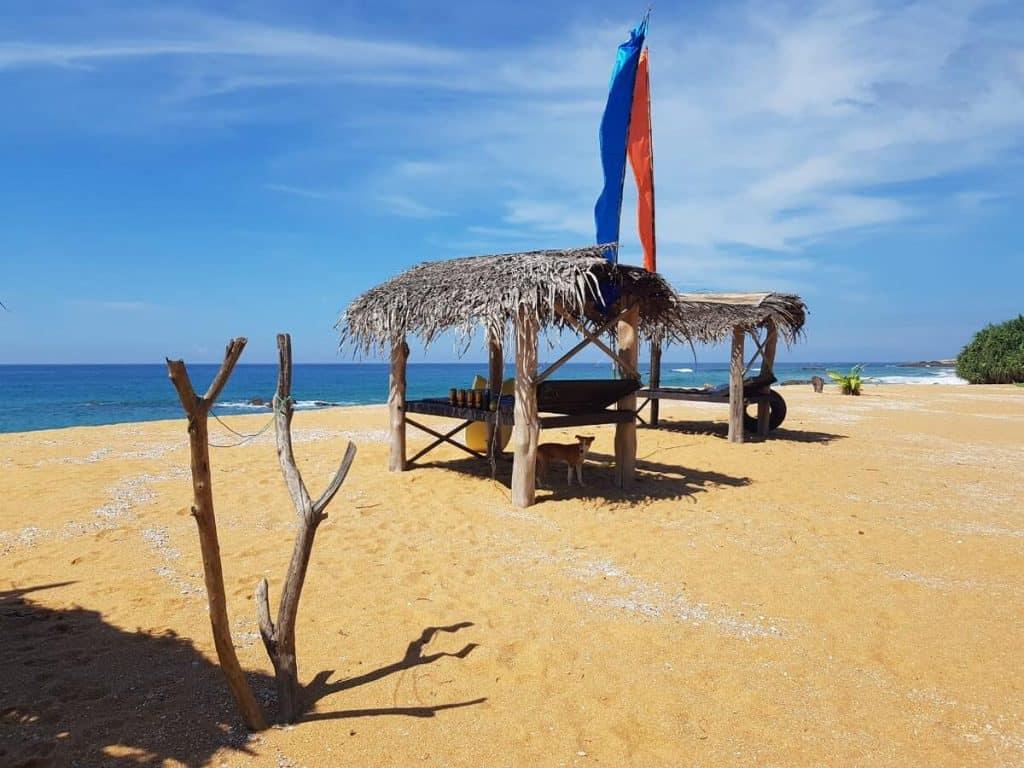 best beach hotels hikkaduwa dreamville