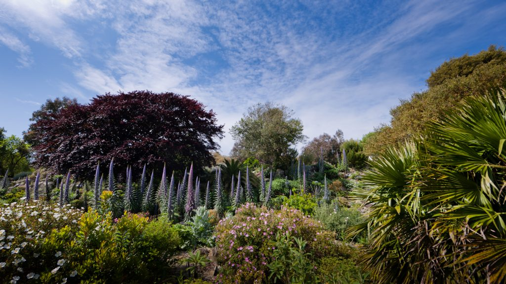 things to do isle of wight Ventnor Botanic Garden