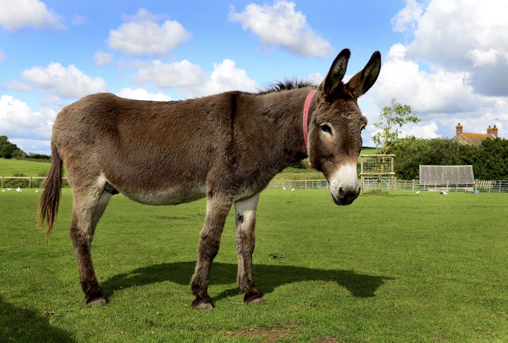 things to do isle of wight donkey sanctuary