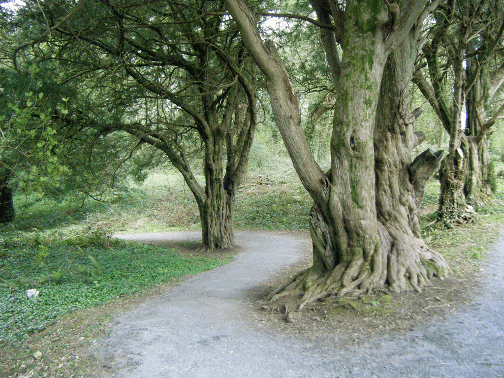 best things to do in tralee Ballyseedy Wood
