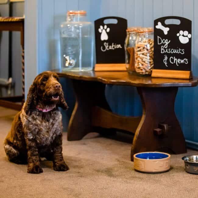 best airbnbs bognor regis The Beachcroft Beach Hut Suites dog friendly