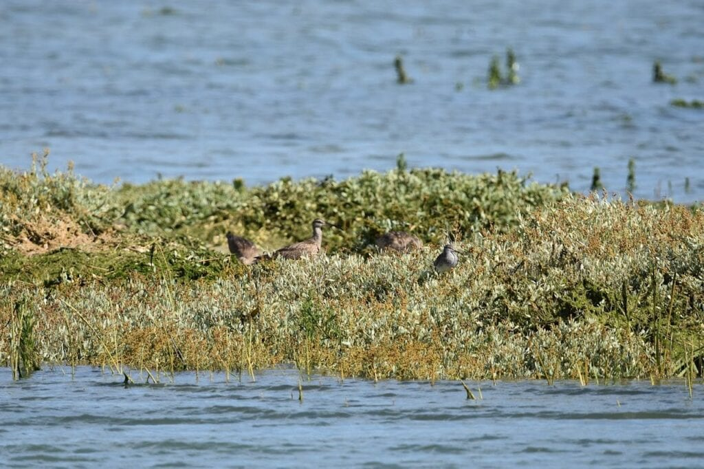 best things to do in bognor regis Pagham Harbour Local Nature Reserve