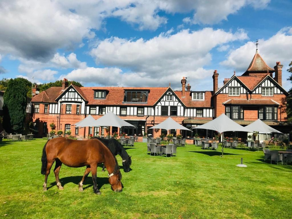best hotels in Milford on Sea forest park