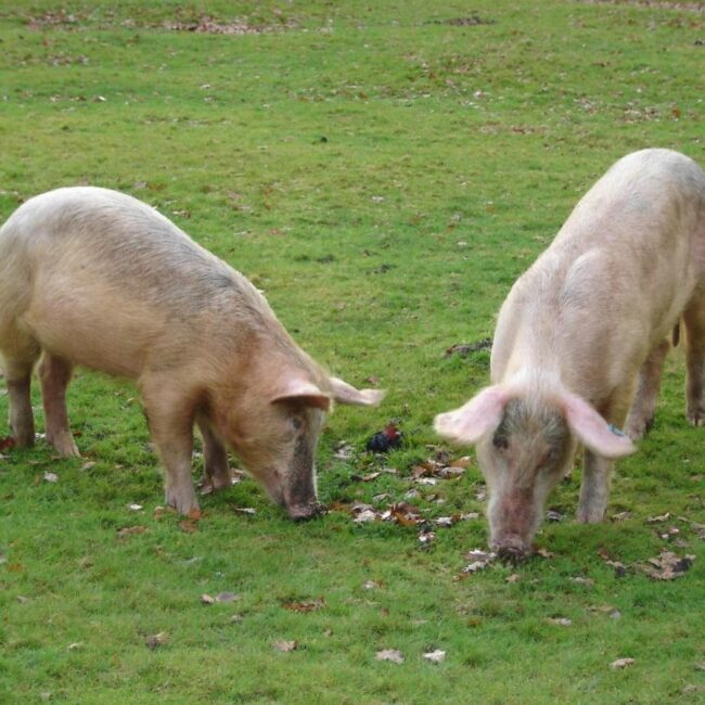 best bed and breakfast new forest hunters croft pigs