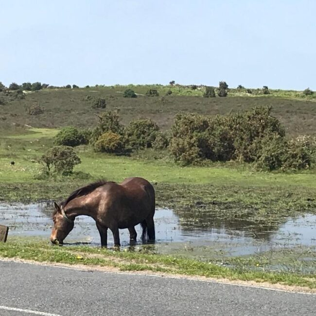 best bed and breakfast new forest rufus house horse