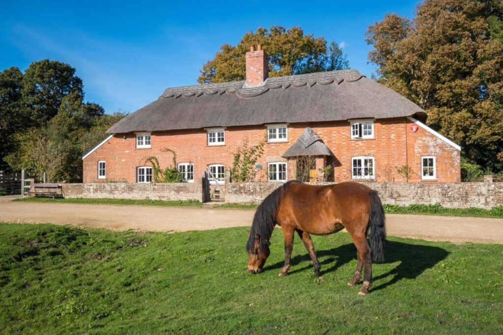 best bed and breakfast new forest thatched cottage