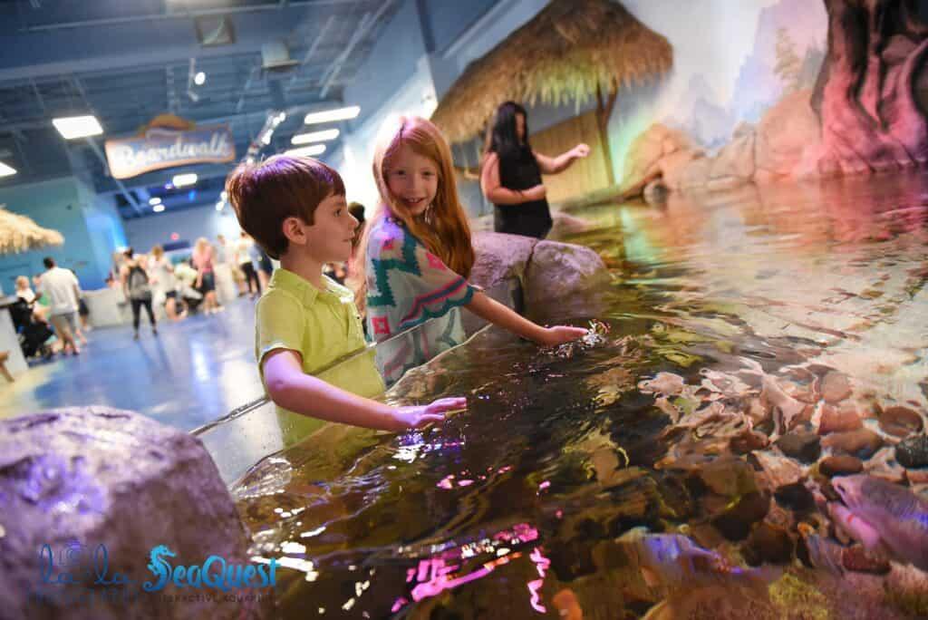 Things to do in Denver awuarium