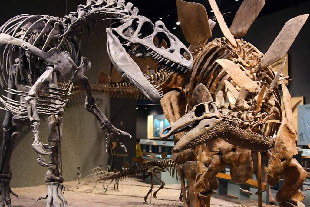 Things to do in Denver museum for nature and science