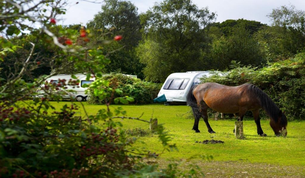 best camping southampton Ocknell Campsite